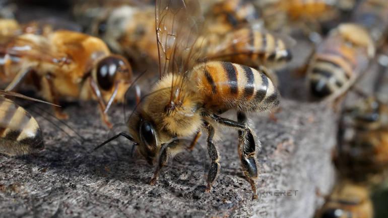 Este mierea foarte fluida falsa?