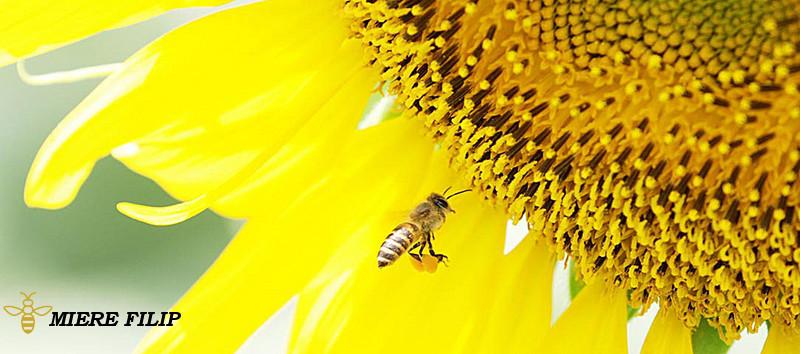 Curiozitati Despre Albine Pe Care Majoritatea Oamenilor Nu Le Cunosc