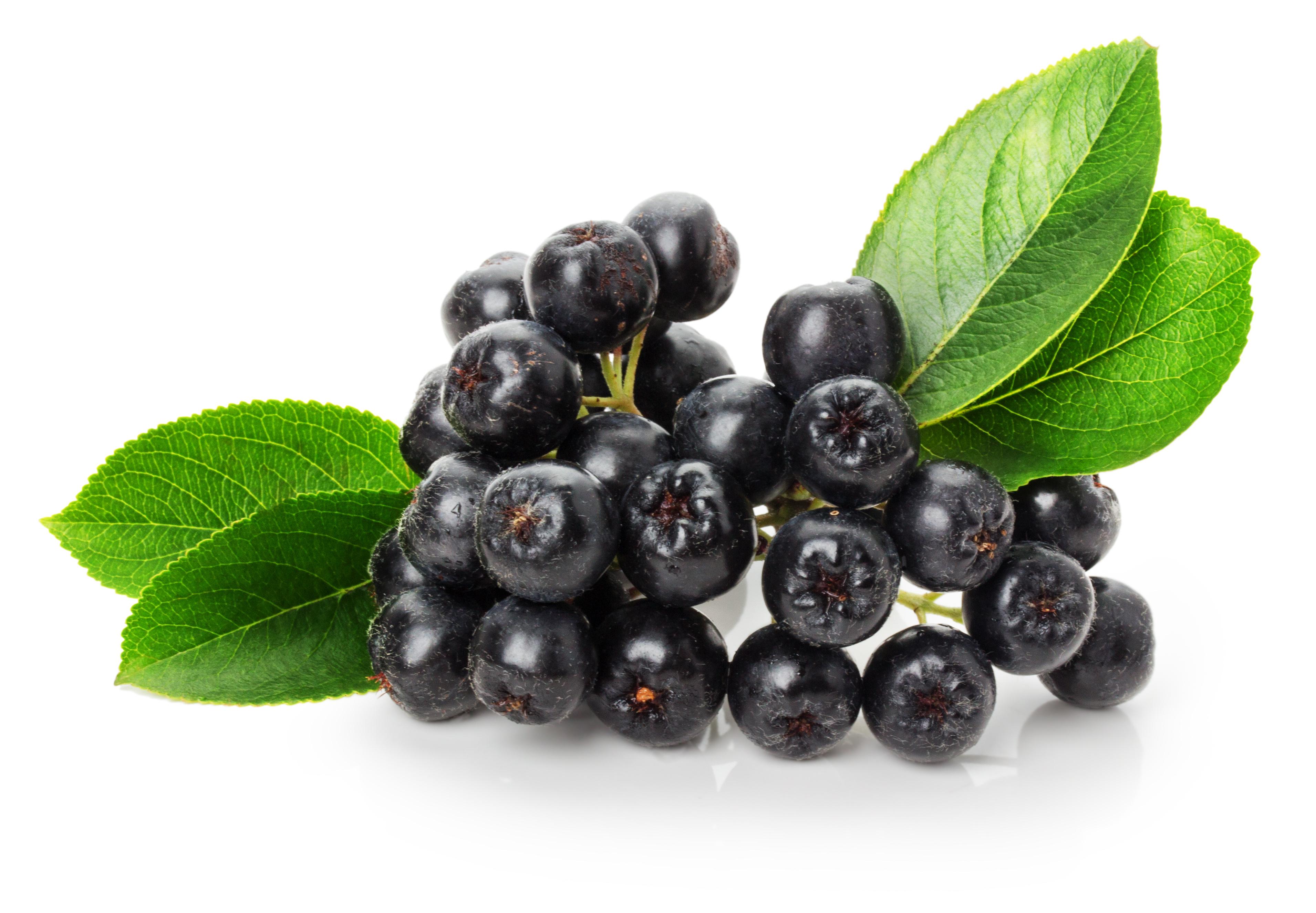 Aronia – cel mai puternic antioxidant