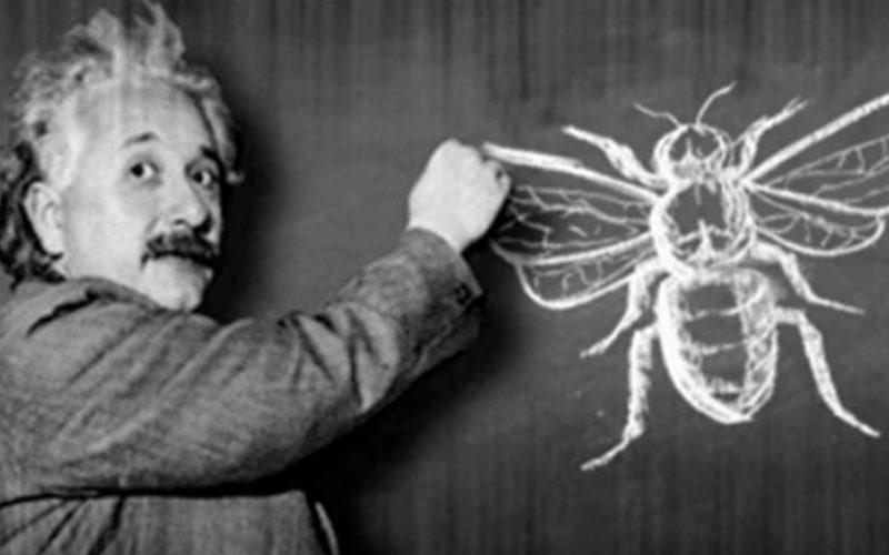 Teoria lui Einstein despre dispariția albinelor